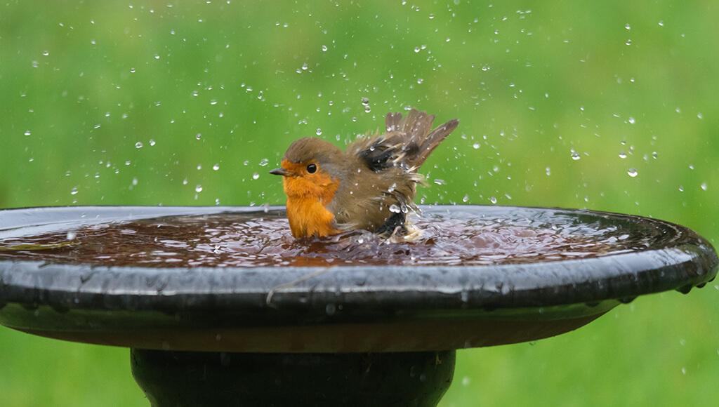 Aves en el jardín , beneficios y cómo atraerlas - Jardinable